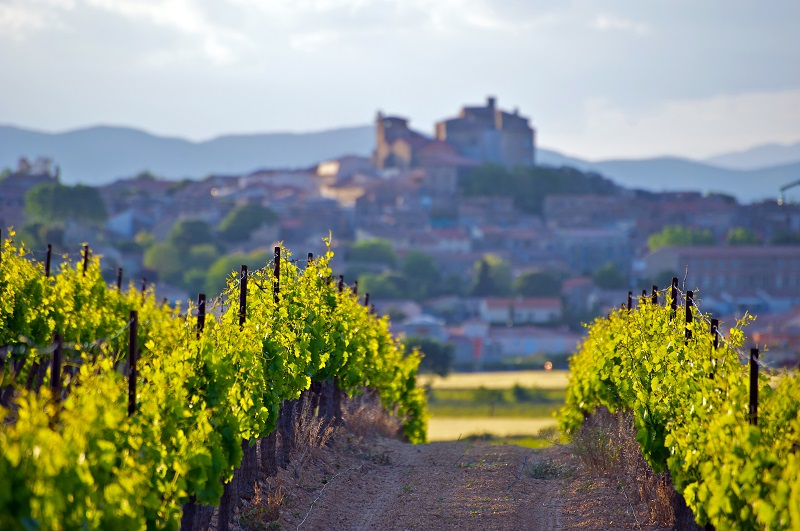 The Chateau of Puissalicon in the Languedoc