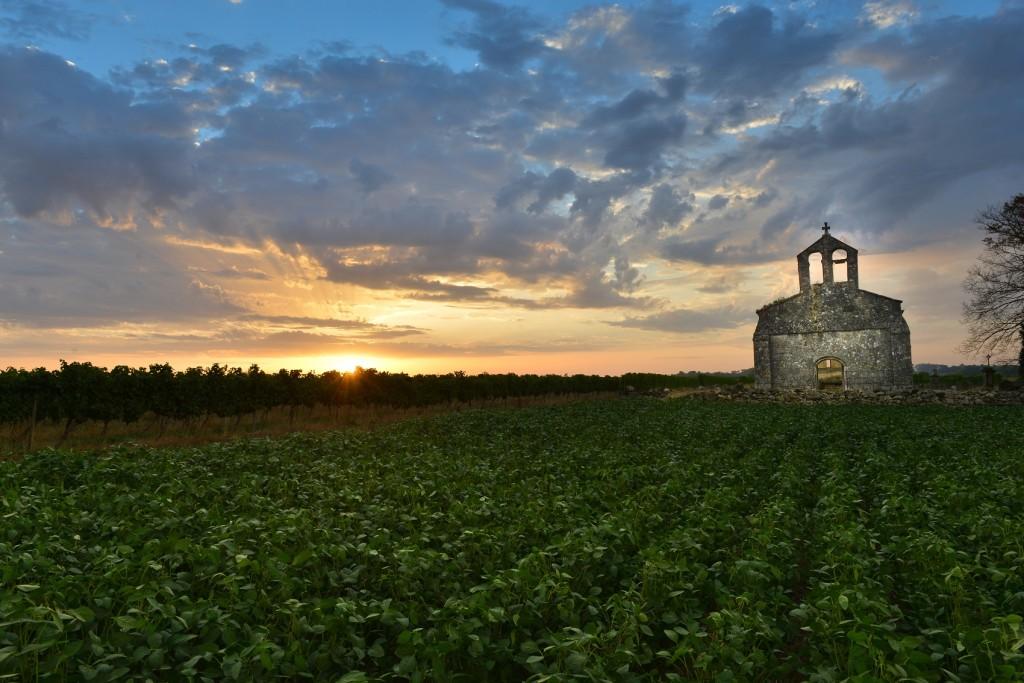 Vineyard and old church Sunrise - Landscape - Bordeaux Vineyard