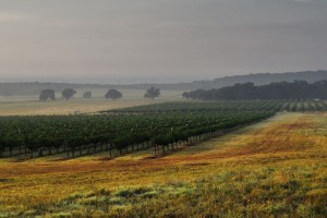 Becker Vineyards in the Hill Country wine region of Texas. Photo courtesy of Becker Vineyards