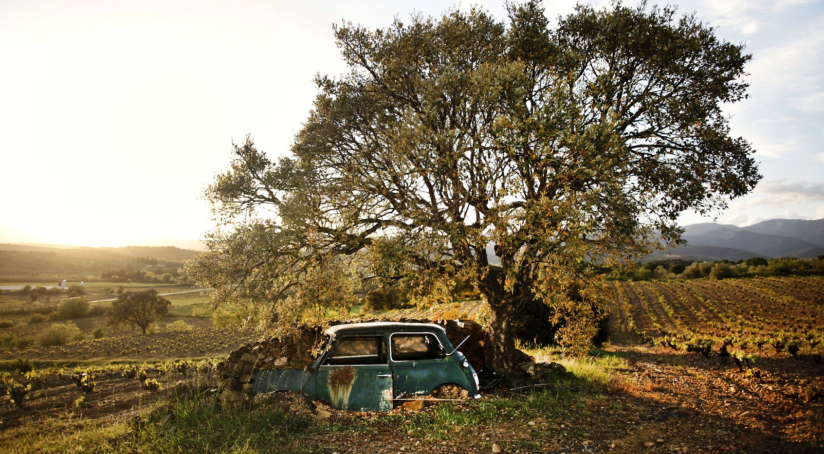 La Vinyeta Winery Girona, Spain - Car Under Tree in Vineyard