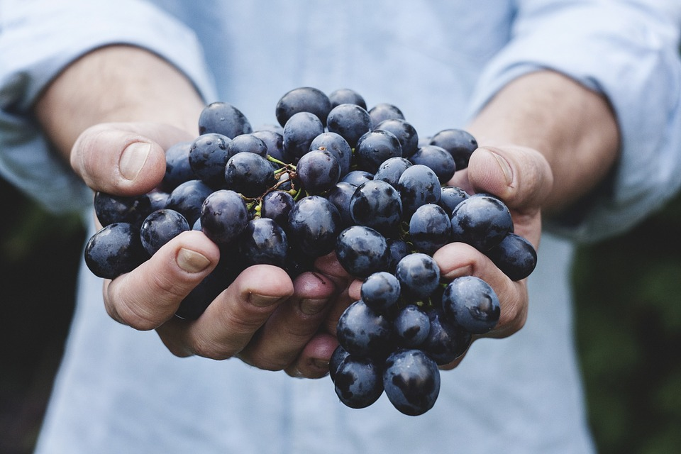 holding a bunch of grapes
