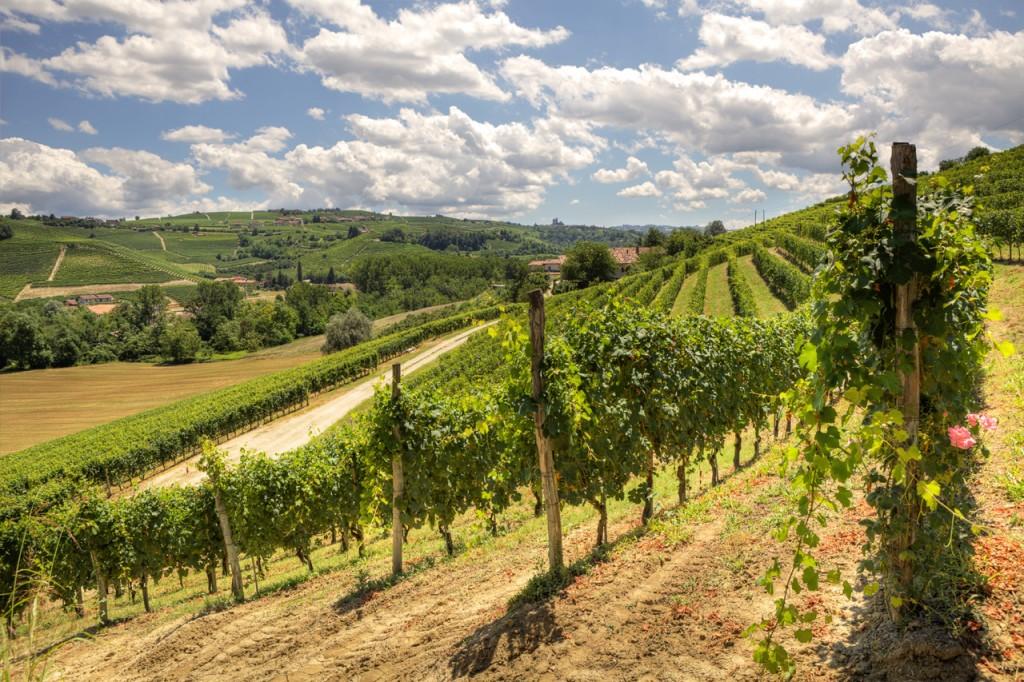 piedmont-langhe-hills-vineyards