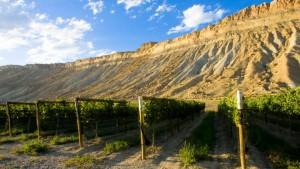 Image by: Colorado.com