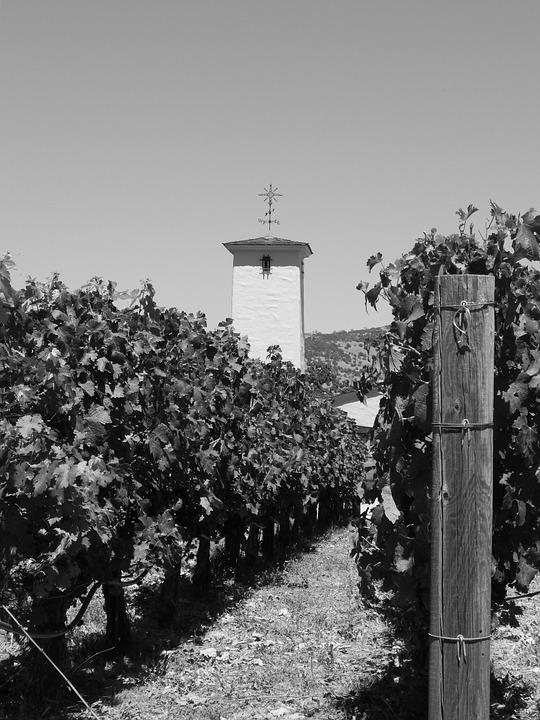 Mondavi Vineyard, Napa, wine quotes
